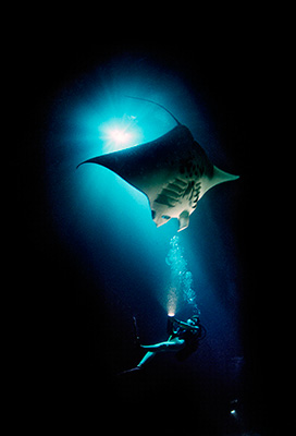 underwater scene with man and manta ray