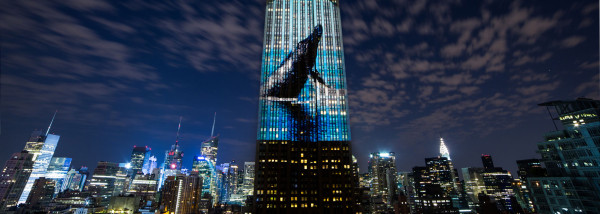 ESB-Whale_credit-OPS-cropped